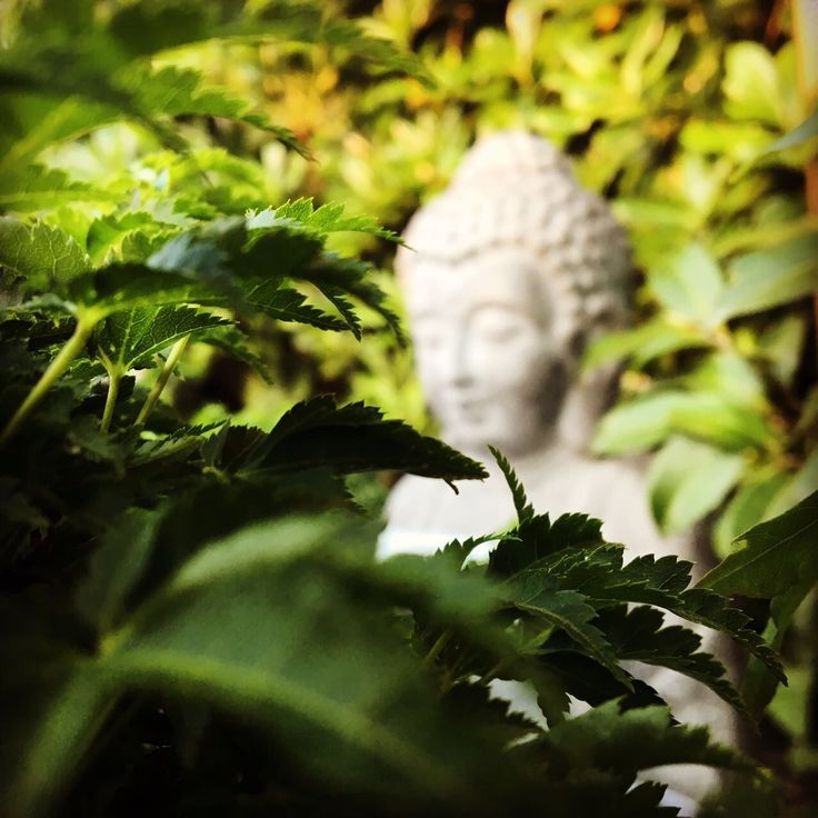 Hidden Buddha #bhangrabar #milano #italia