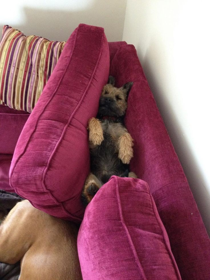 Twitter / teddypett: My new sleeping place !!!! ...