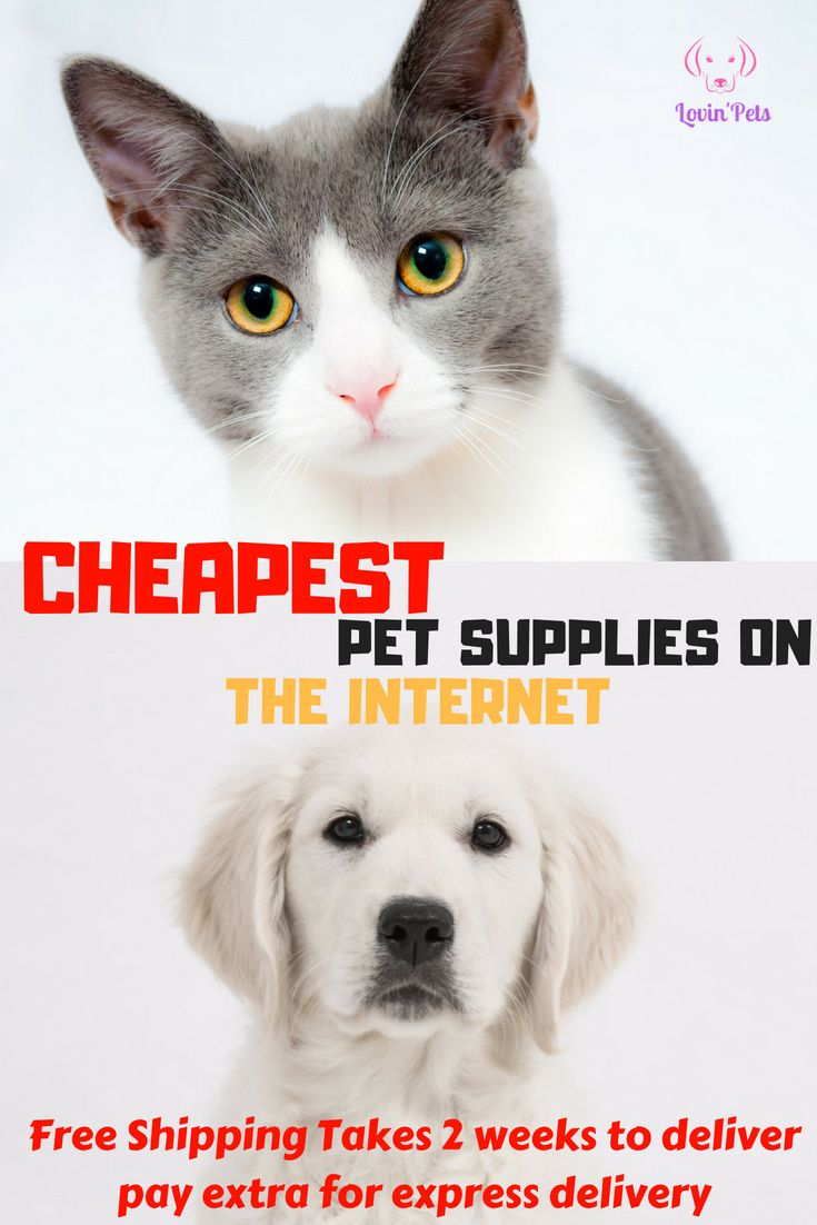 Lovin Pet Is Offering The Cheapest Pet Supplies On The Internet