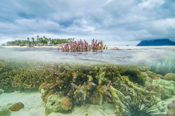 Corals reefs #maiga #island #semporna #sabah #malaysia #nature #naturegram #naturephotography #explore #exploring #discover #place #travelgram #travel #traveller #travelphotography #photography #photographer #photo #photooftheday #photoshoot #urbanlandscape #urban #urbanexplore