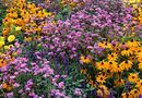 How to Design a Full-Sun Perennial Flower Bed | Home Guides | SF Gate