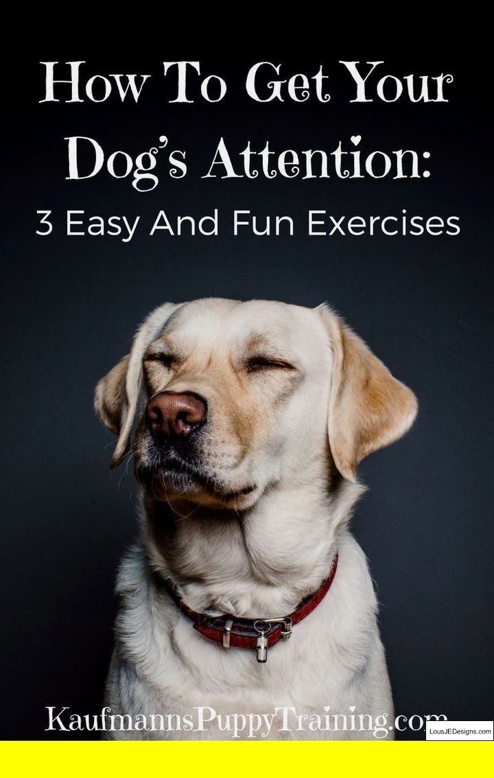 Potty Training Deaf Puppy And Pics Of Dog Training Books In Marathi