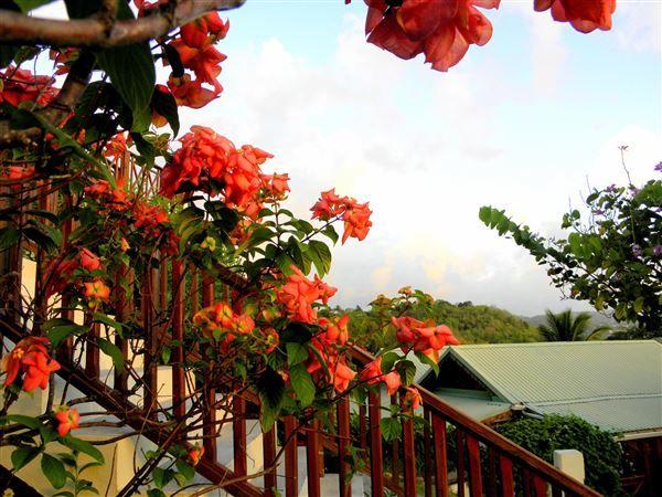 St Lucia Cruise Holidays Luxury Travel Boutique