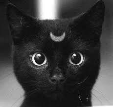 Resultado de imagen para gato negro tumblr