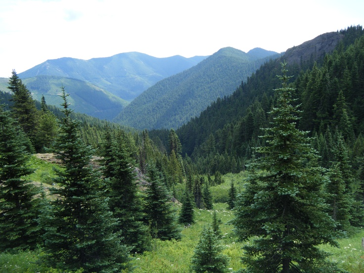 Mt. Townsend, Olympic National Forest