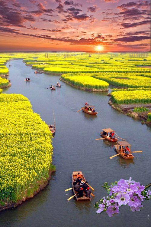 Plantação de canola cortada por um rio cheio de barcos ao pôr do sol, Xinghua, China.  --- http://www.suntzulives.com/ https://www.facebook.com/suntzuproject/