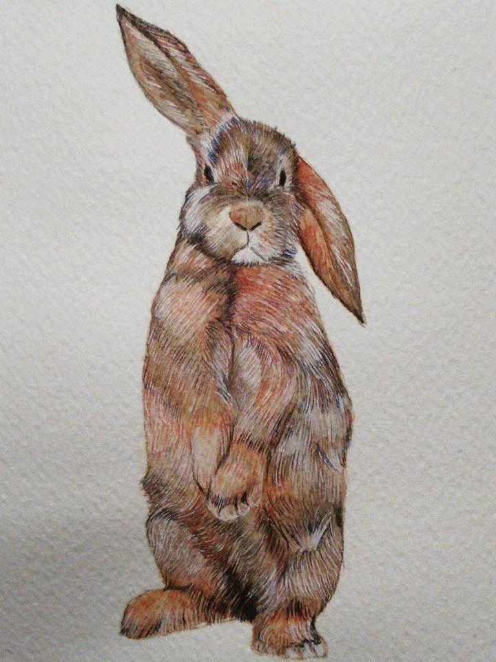 #Artigiano: Simona Breccia #Disegno rappresentante un #Coniglio. Realizzato con Tecnica Mista, acquerello e pastello, su carta 20 x 30 cm. Acquistalo su http://www.ductilia.com/shop/coniglio/