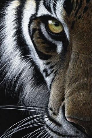 Eye of the tiger Miz