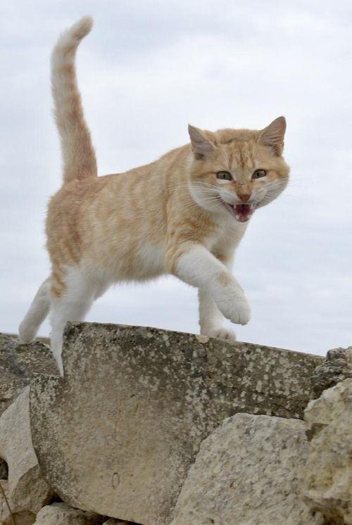 猫好きの聖地、70万匹が暮らす 地中海の島国・マルタ共和国 : コピペ情報局