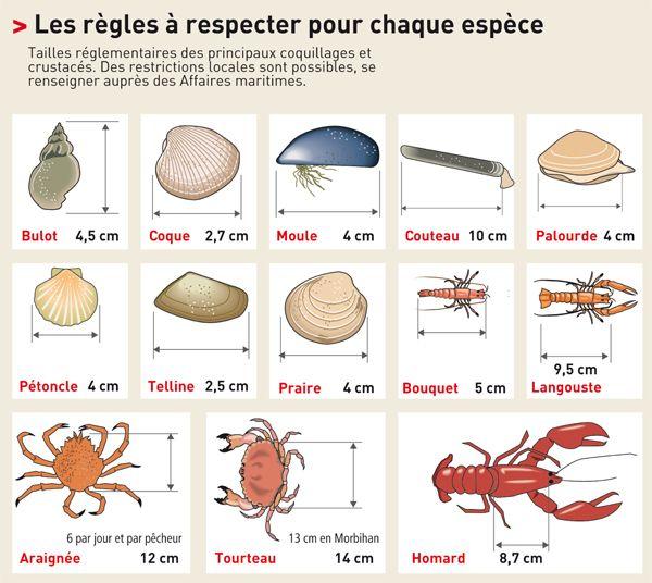 PECHE A PIED : Attention à la taille !  taille peche crustaces