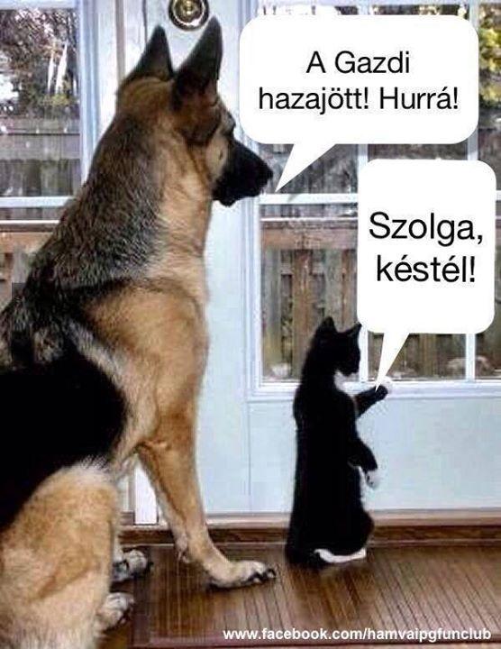 Ennyit a macskákról! :D