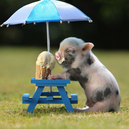 For Kayte: ice cream AND a piglet!  It's a WIN -WIN situation!