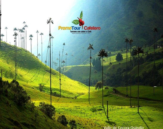 Valle de Cocora, La Palma de Cera mas grande del Mundo,