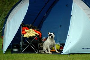 Tips on camping with dogs... :)