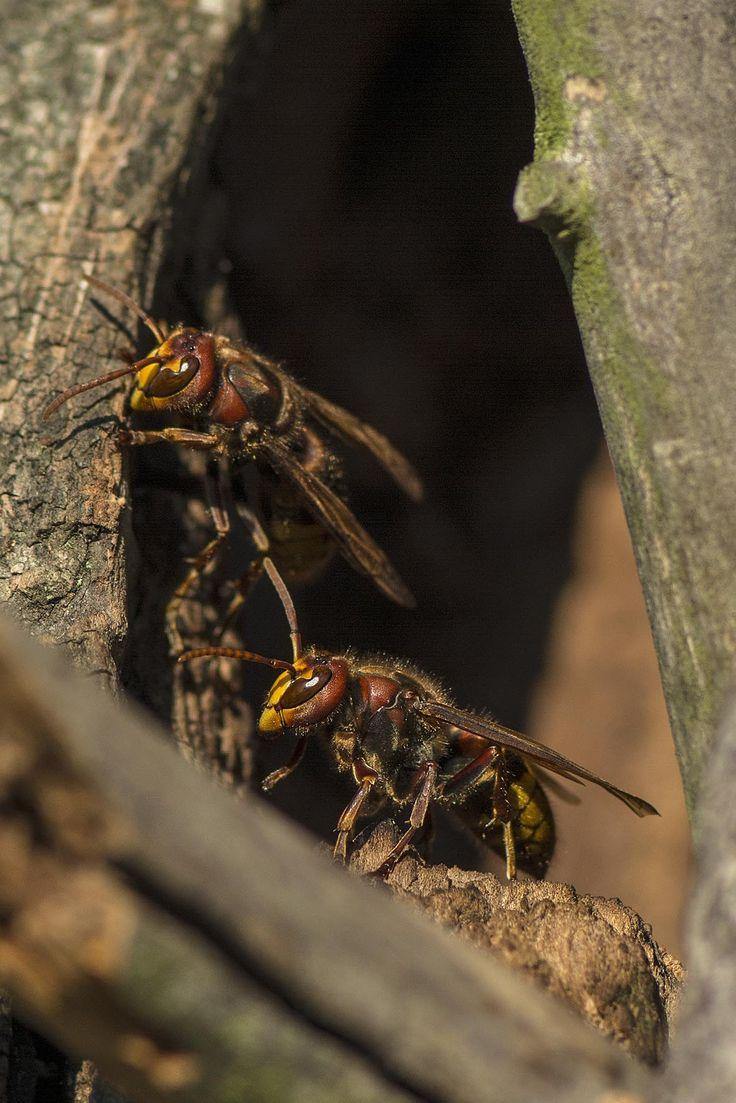 Mejores 1222 imágenes de insect en Pinterest | Insectos, Anatomía ...
