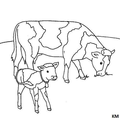 Pin Auf Kuh Malvorlagen