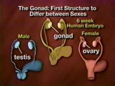 ▶ Facts of Life -- Gender Determination - YouTube