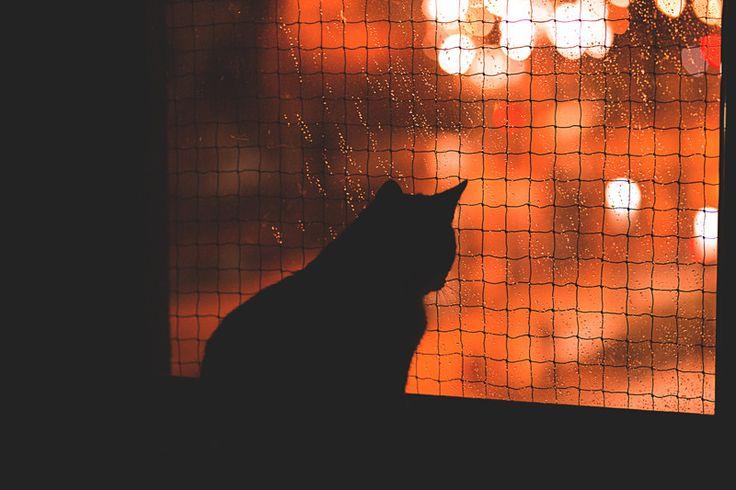 Kot patrzący przez okno- zdjęcie na płótnie w Fotografia Monika Małek na DaWanda.com