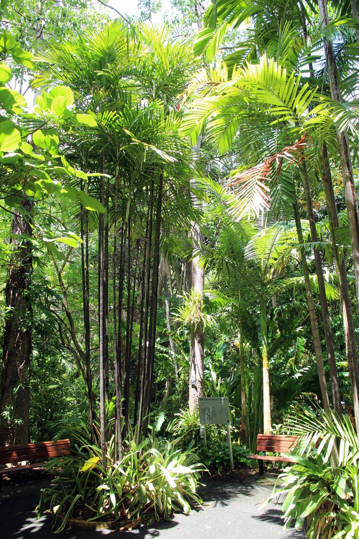 Date trees in Brisbane