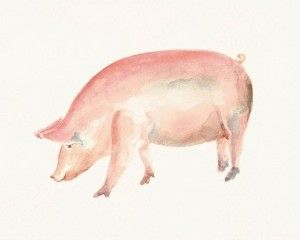 pig watercolor   PIG Original watercolor painting 10X8inch by dimdi on Etsy   review ...