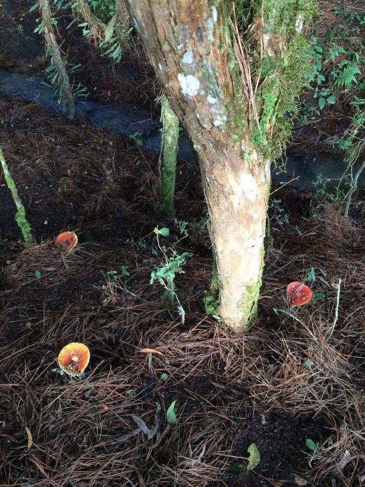 Mushroom III