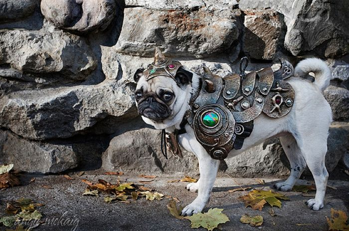 great warrior pug