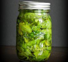 Conserve de basilic frais