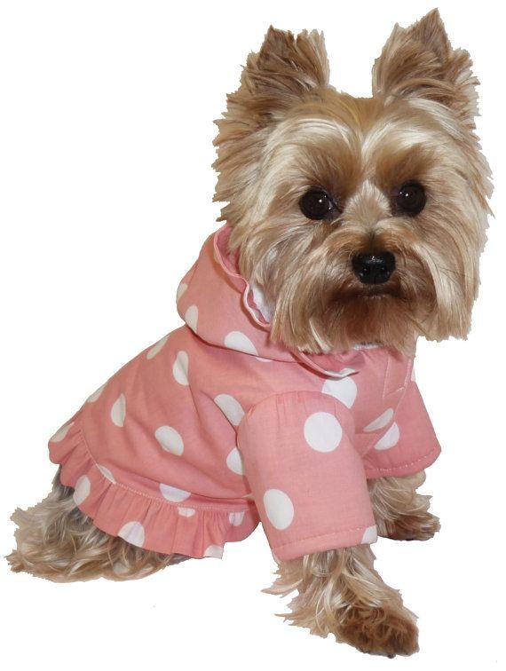 The 25+ best Little dogs ideas on Pinterest | Cute baby ...