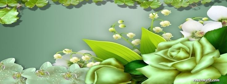 Irish Green Rose Facebook Covers, Irish Green Rose FB Covers, Irish Green Rose Facebook Timeline Covers, Irish Green Rose Facebook Cover Images