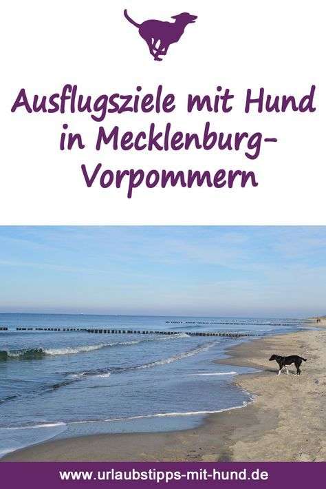 Sehenswürdigkeiten, an denen Hunde erlaubt sind auf der Insel Rügen, auf Usedom, an der Ostsee und der Mecklenburger Seenplatte. Viele tolle Ausflugsziele mit Hund. Urlaub mit Hund in Deutschland an der Ostsee und der Mecklenbuger Seenplatte.