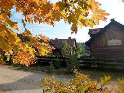 w szuwarach: Jesiennie w Szuwarach