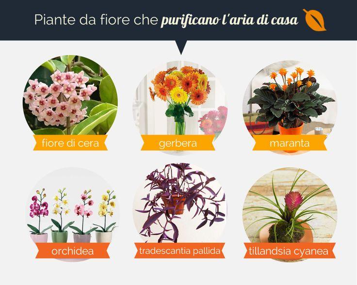 Oltre 25 fantastiche idee su piante da fiore su pinterest paesaggio ombreggiato - Piante da casa che purificano l aria ...