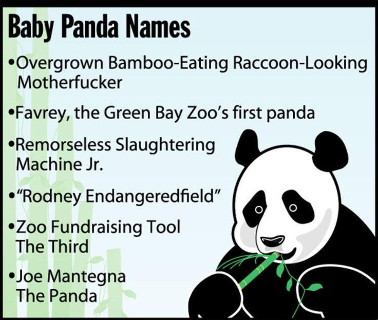 Baby Panda Names - The Onion - America's Finest News Source