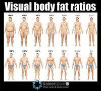 Visual body fat ratios