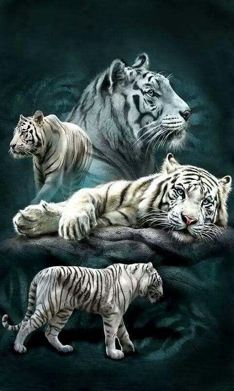 White Tigers                                                                                                                                                                                 More
