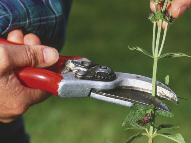200 best images about garden delights tools of the trade for Basic garden maintenance