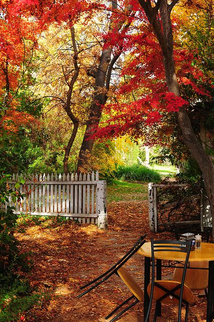 Autumn .... coming soon to a state near you!: Gardens Ideas, Fence, Company Picnics, Color, Summer Picnics, Favorite Seasons, Autumn Beautiful, Backyard Gardens, Paintings Brushes