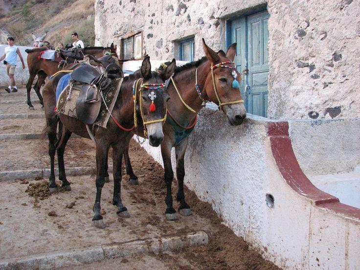 You have to explore #Santrorini with a donkey! It's a #tradition! Photo credits: Aurora Rincon Llovera
