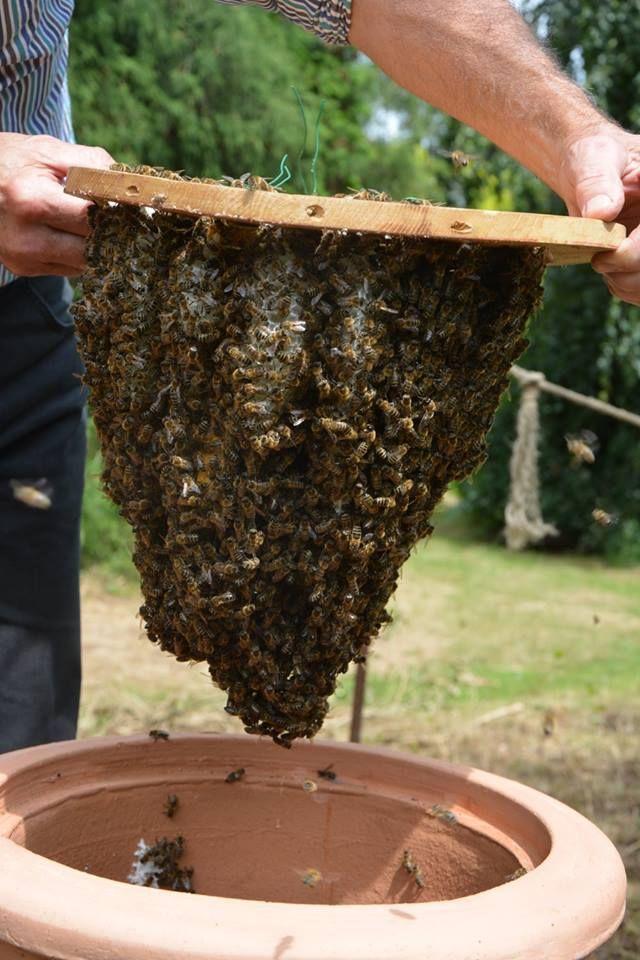les 183 meilleures images du tableau apiculture sur pinterest