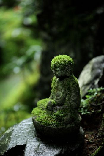 Mossy Jizo statue at Renge-ji temple, Kyoto, Japan