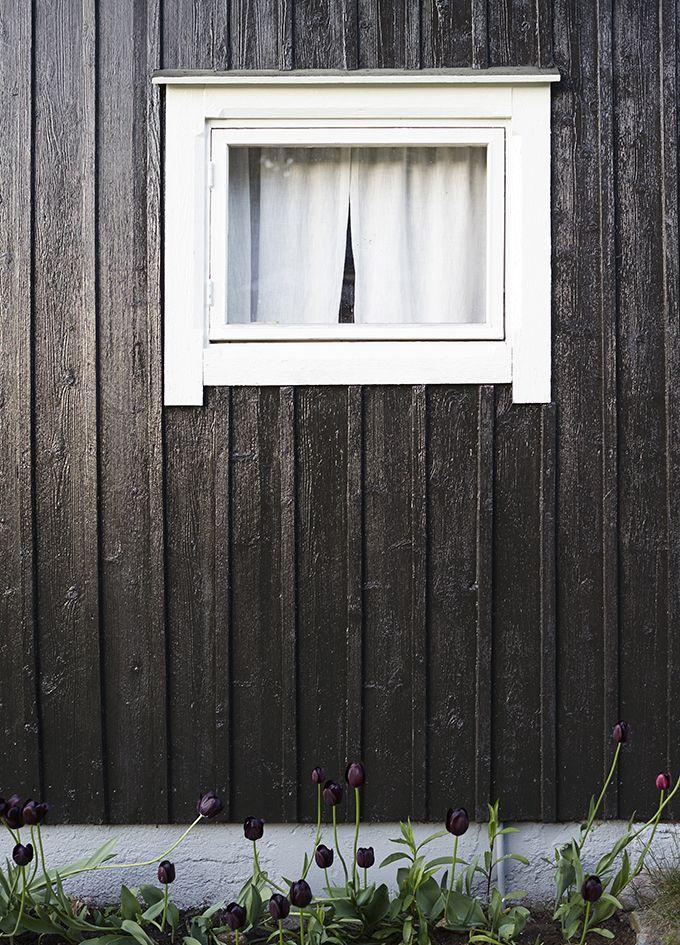 Varpunen: Varpunen + Tikkurila IV: Musta navetta. Ikkuna maalattu Teho Ikkunamaalilla, puutalo Teho-maalilla. #tikkurila #maalaustalkoot #varpunen #puutalo #mökki #navetta #ikkuna
