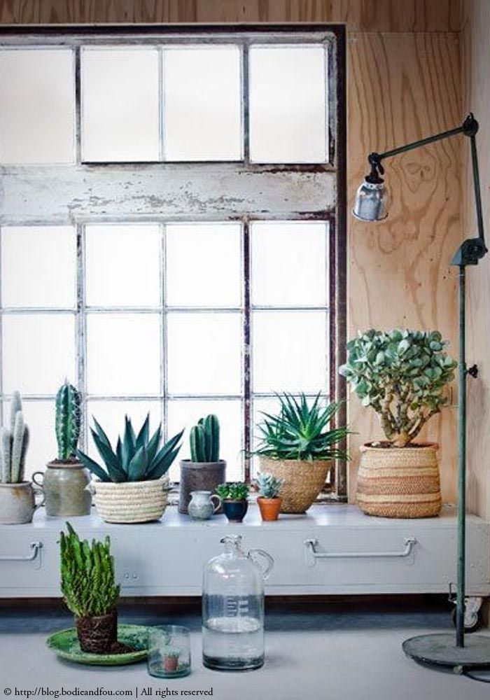 Plant Interior Design Entrancing Decorating Inspiration