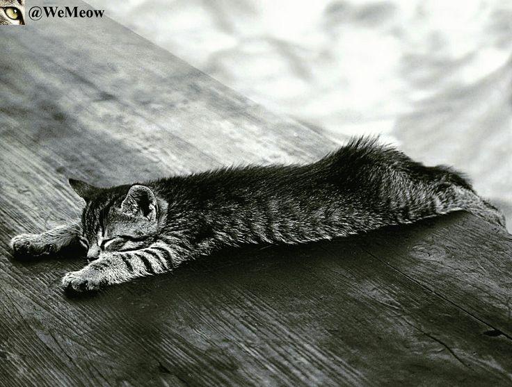 Soo lazy  https://www.youtube.com/c/WeMeow #cat #cats #wemeow #meow #catlife #cutecat #catlove #lovecats #gatos #gatti #koty #katze #chats #kitty #kitten #kittens #lovecat #funnycat #cateye #beautifulcat #nicecat #amazingcat #catlooking #catofinstagram #catsoftumblr #catstagram #instapets #instacat #pet #pets #lazycat #lazy