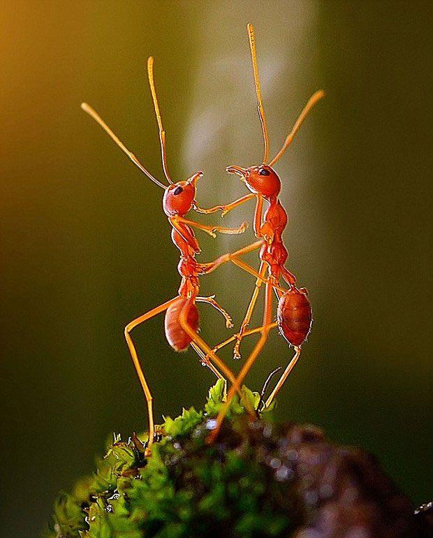 """Fotógrafo captura momento em que formigas se juntam para """"dançar"""""""