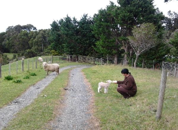 Feed sheep! Overlooking beautiful Taurikura Bay at base of majestic Mt Manaia,Whangarei Heads, 1 Bedroom, 1 Bath, Sleeps 2