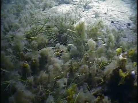 Itämeri pinnan alta (lyhyt versio) - Baltic Sea underwater (short version)
