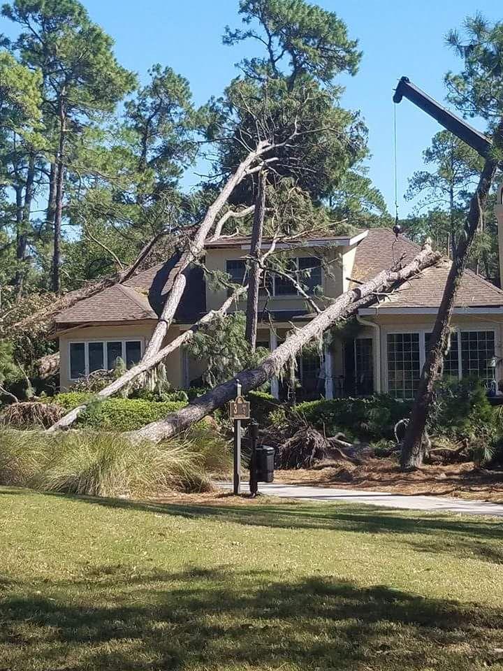 Emergency tree removal emergency tree removal autumn
