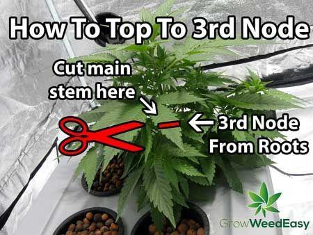 963 besten cannabis growing bilder auf pinterest bonsai cannabis und gew chsh user. Black Bedroom Furniture Sets. Home Design Ideas