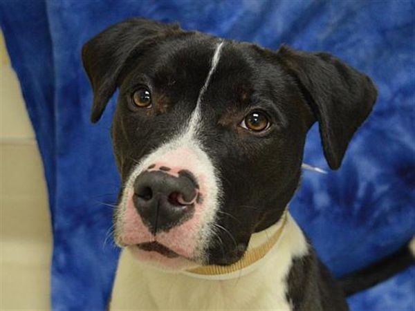 Pin On Ohs Adoptions 23