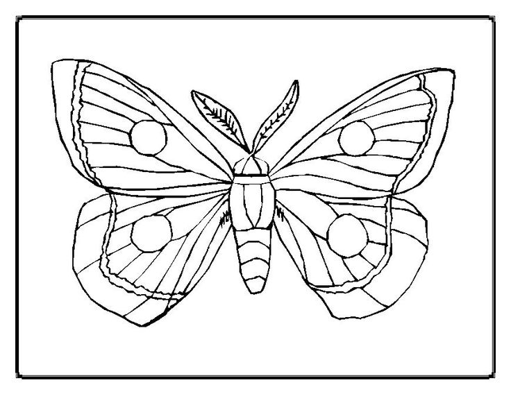 butterfly chrysalis coloring pages - photo#36